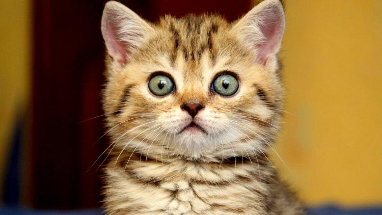 surprisedcat3.jpg